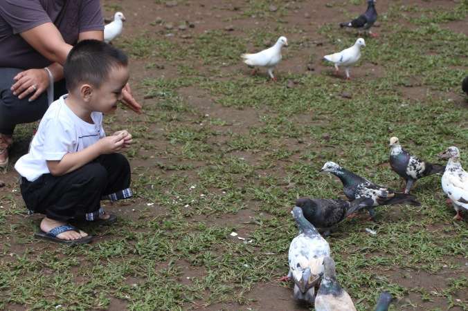 These birds roam around the area freely and you are allowed to feed them.